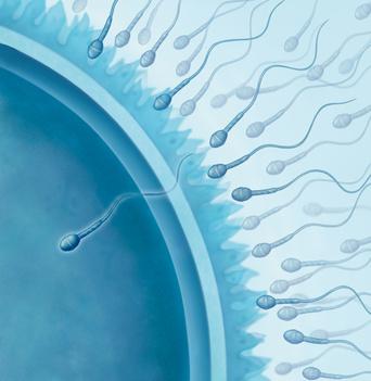 L-Arginin verbessert die Fruchtbarkeit